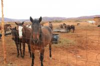 Mustangs MV.jpg